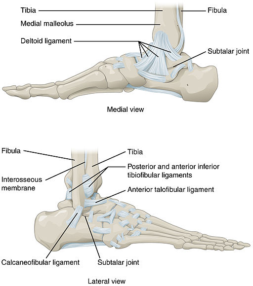 ankle-and-feet-joints1